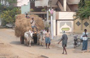 equipe humanitaire personnes dans la rue boeuf
